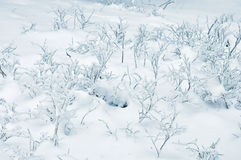 Frost på filialer Royaltyfri Foto