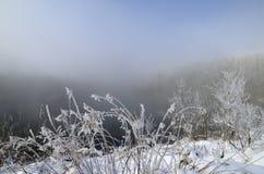 Frost på filialer av träd och gräs på bakgrunden av en sjö Royaltyfria Bilder