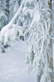 Frost på filialer för ett träd Royaltyfri Fotografi