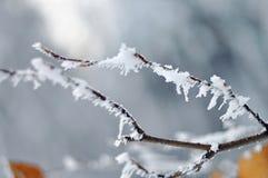 Frost på filialer för ett träd Royaltyfri Bild