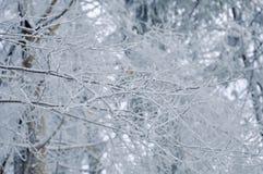 Frost på filialer för ett träd Royaltyfri Foto