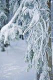 Frost på filialer för ett träd Royaltyfria Bilder