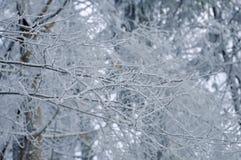 Frost på filialer för ett träd Arkivfoton
