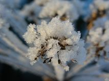 Frost på fotoet för paraplyskottmakro Royaltyfri Foto