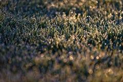 Frost på gräs i soligt fält royaltyfri bild