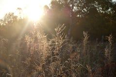 Frost på gräset Fotografering för Bildbyråer