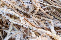 Frost på gräset på hög fuktighet royaltyfria foton