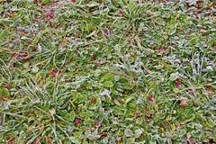Frost på grönt gräs royaltyfri foto