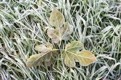 Frost på sidor och gräs arkivfoto