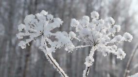 frost på torrt gräs arkivfilmer