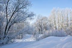 Frost på treesna Arkivfoton