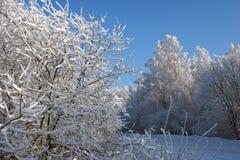 Frost på treesna Arkivfoto