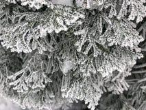 Frost p? filialerna av julgranen arkivfoto