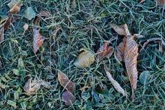 Frost p? gr?s och torra sidor royaltyfri fotografi