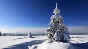 Frost på träd - bohem Forest Sumava för republiktown för cesky tjeckisk krumlov medeltida gammal sikt Arkivbilder