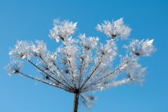 Frost Royalty Free Stock Photos