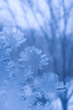 Frost Pattern On A Window Glass Stock Photography