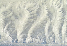 Frost pattern on window glass. Royalty Free Stock Image