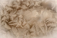 Frost pattern. On window in golden color Royalty Free Stock Images