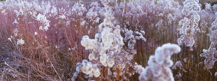 Frost patterns in the reeds Stock Photos
