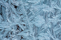 Frost patterns on a window Stock Image