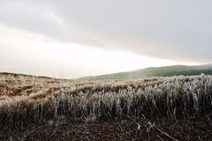 Frost pine grass on mountain hill with beam of sun from cloud Stock Photo