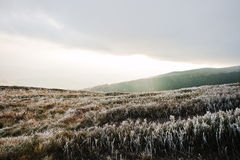 Frost pine grass on mountain hill with beam of sun from cloud Royalty Free Stock Photography