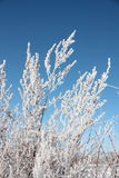 Frost on plants Stock Images