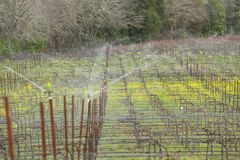 Frost protection in vineyard Royalty Free Stock Image