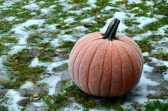 Frost on a Pumpkin Royalty Free Stock Images