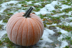 Frost on Pumpkin. A pumpkin with frost on it sitting in a snowy lawn stock image