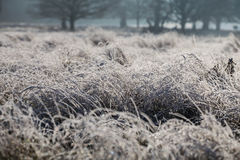 Frost in richmond park. Early January Stock Photography