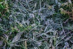 Frost-rosée sur l'herbe Photo stock