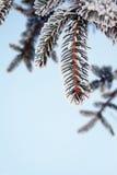 frost sörjer arkivbild