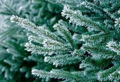 frost sörjer treen arkivbild