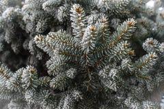 frost sörjer treen Arkivfoto