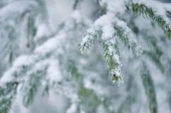 frost sörjer treen Royaltyfri Fotografi