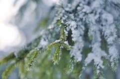 frost sörjer treen Royaltyfri Bild