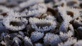 Frost shelves Royalty Free Stock Photo