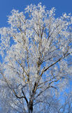 Frost and snow covered tree Stock Photo