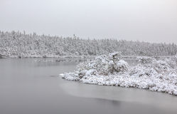 Frost and snow. Snow covered trees and shrubs on a almost frozen lake Stock Image