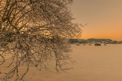 Sunset in the mountains. Frost, snow, tree against the background of sunset in the winter mountains Stock Image