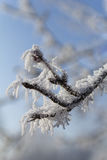 frost snow tree ice. Frost Snow Forest Ice Tree Royalty Free Stock Photos