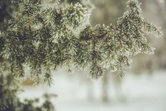 Winter frost and snow Royalty Free Stock Images