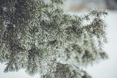 Winter frost and snow Royalty Free Stock Photography