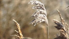 Frost on the spike on a winter day stock video footage
