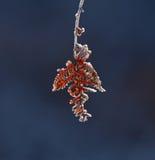 Frost sul Bracken fotografia stock libera da diritti