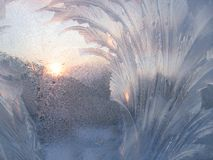 Frost and sun Royalty Free Stock Photo