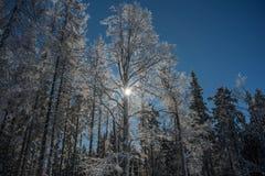 Frost, sun - wonderful winter day Stock Image