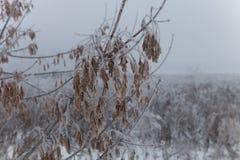 Frost sur branches Paysage naturel provincial russe par temps sombre Foyer s?lectif Profondeur de zone photo libre de droits